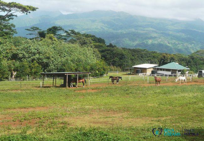 Equestrian centre, horserides across Tahiti island during a holiday at the Villa miti natura