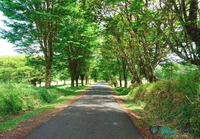 Plateau Taravao, Villa miti natura, stay on Tahiti island and explore the nature, lagoon and beaches