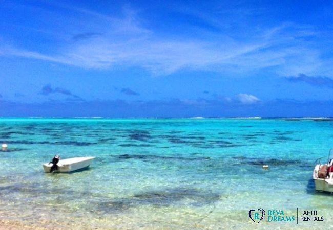 Lagon transparent du Fare Pacifique, séjours et vacances en pleine nature sur îlot à Moorea, Polynésie Française