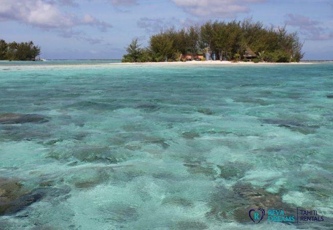 Plage - Motu Bora Bora - Tahiti In Style - Polynésie française