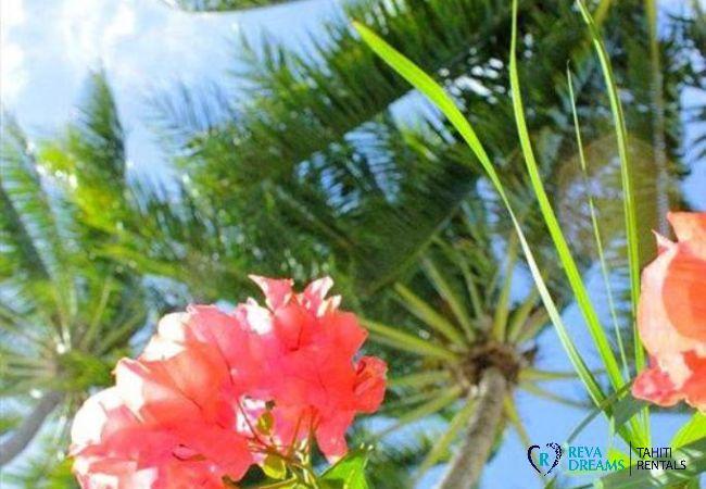 Profitez du calme et de la nature au cœur du jardin tropical du Fare Aroha Ho'e, location de vacances à Bora Bora