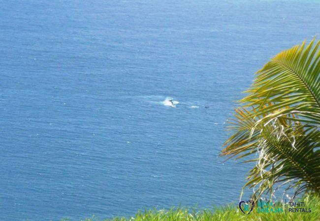 Vue de la Villa miti natura, baleines, nature et activités aquatiques en Polynésie Française